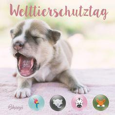 Für alle #Tierliebhaber haben wir zum #Welttierschutztag was #Flauschiges für´s #Smartphone! #Webcam #Cover für euch #Sweethearts gibt es auf http://bloppys.de/produkt-kategorie/cute-and-colorful/