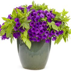 Container Gardening Ideas HGTV Gardens offers ideas for great container plant and flower combinations. - HGTV Gardens offers ideas for great container plant and flower combinations. Container Flowers, Flower Planters, Container Plants, Container Gardening, Vegetable Gardening, Succulent Containers, Fall Planters, Organic Gardening, Fairytale Garden