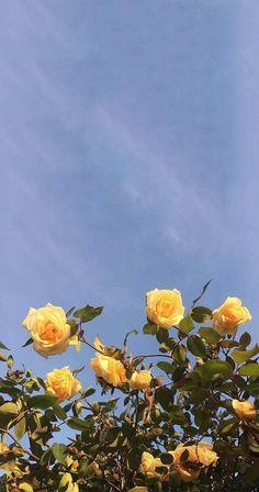 Ideas yellow aesthetic wallpaper flower for 2019 Yellow Aesthetic Pastel, Aesthetic Pastel Wallpaper, Aesthetic Backgrounds, Aesthetic Wallpapers, Colorfull Background, Flowers Background, Yellow Background, Landscape Background, Background Ideas