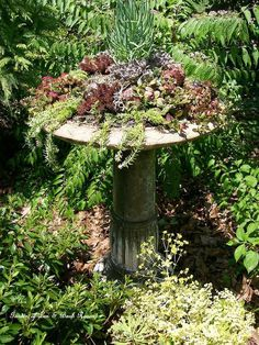 making a succulent garden in an old birdbath, container gardening, flowers, gardening, repurposing upcycling, succulents, This project cost a total of 20 because I used mostly materials and plants I already had See it on Our Fairfield Garden board on Pinterest Barb Rosen and my website