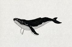 Whale illustration and backgrounds by Vera Serg on Animal Sketches, Animal Drawings, Art Sketches, Art Drawings, Animal Illustrations, Whale Painting, Painting & Drawing, Whale Art, Blue Whale Drawing