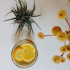 Lemon Water elephant instagram safe to reuse