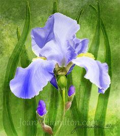"""Am I Blue"" - Digital Watercolour, in Floral Gallery Wedding Card Design, Wedding Cards, Simple Designs, Fine Art America, Iris, Flower Paintings, Watercolor, Digital, Gallery"
