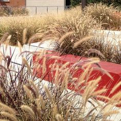 This is nice although the maroon in Pennisetum clashes with the red bench