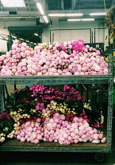 piles of peonies / sf flower mart