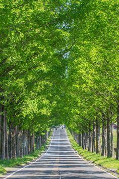 Shiga, Japan