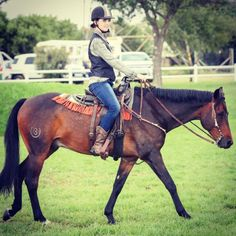 Devondale Abadon HOY 2017 Boerperd Western Champ Champs, Westerns, Horses, Animals, Animais, Animales, Animaux, Animal, Dieren