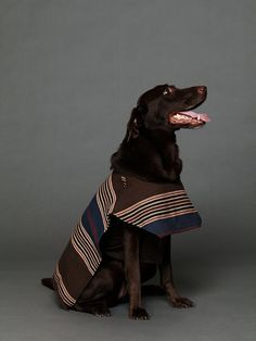 Dog poncho!   I personally want to say that I cannot believe I saw this pic that reminds of my dog named Poncho, too. --jennylocy
