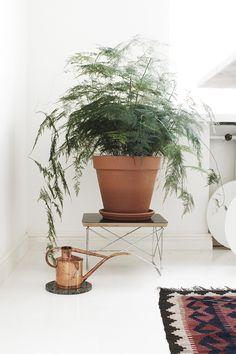 #habitare15 #uudistuminen #design #sisustus #varpunen #dekolehti #habitare2015 Fig, Planting Flowers, Planter Pots, Bouquet, Interior Design, Plants, Gardens, Homes, Interiors