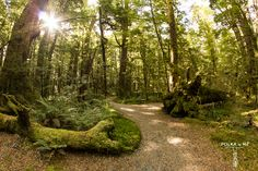 Nature Walk, Lake Gunn, Fiordland, South Island, New Zealand