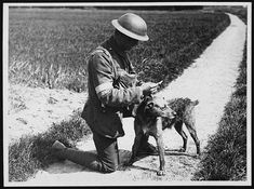 Reading a message this dog has just delivered. He has just swam across a canal to get to his master, c. 1917  The message would been scrolled up inside a waterproof container attached to the dogs collar. It is likely that the kit bag worn on the handlers chest would have contained the incoming and outgoing messages.  After recruitment from Battersea Dogs' Home, trainee messenger dogs were trained for service at The War Dog Training School in Shoeburyness, England.