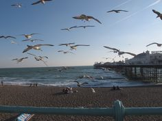 Seagulls and the Palace Pier, Brighton