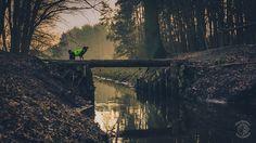 Puszcza Wkrzańska - Kanał Wołczkowski