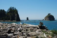 First Beach, La Push, Washington- Dorian selected a piece of driftwood for my 61st birthday.  How special!
