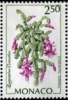 Zygocactus truncatus , Schlumbergera, Christmas Cactus, Thanksgiving Cactus, Crab Cactus and Holiday Cactus. Drawings by Monacan architect and illustrator Ιtienne Clerissi engraved by Czeslaw Slania . Postage stamp issued by Monaco 1993 Postage Stamp Design, Christmas Cactus, Pin Up, Botanical Illustration, Cactus Illustration, Flower Stamp, Vintage Stamps, Mail Art, Stamp Collecting