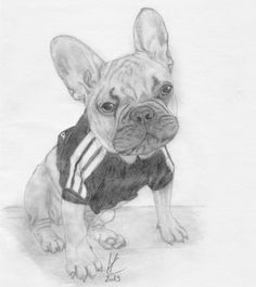 #frenchbulldog #dog #drawing #pencil #hund #bleistiftzeichnung #disegnoamatita #cane Der Computer, French Bulldog, Sketches, Drawing, Dogs, Painting, Animals, Children Drawing, Drawing Ideas