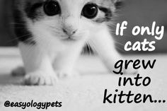 """""""If only cats grew into kitten!"""" @easyologypets"""
