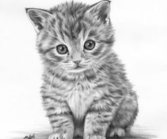 Wow. Pencil Drawing of kitten