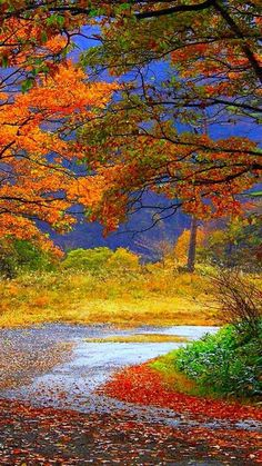 Wonderful Fall colors.