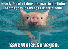 """""""Nearly half of all water used in the United States goes to raising animals for [human] food."""" Save water. Go vegan."""