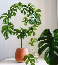 127 Best Our Top Houseplant Picks Images In 2020 Houseplants
