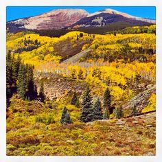 #RedLady #YellowLeaves! #cbcolors #colorfulcolorado #fall #foliage #aspens #crestedbutte #keblerpass #mountains Photo: Chris Segal