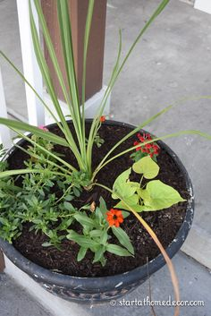 Container Gardening For Beginners Start at Home Decors Beginners Guide for Planting Flower Pots - Our beginners guide to planting flower pots will help you get the most out of your flowers this year and create full beautiful pots! Large Flower Pots, Flower Planters, Container Flowers, Full Sun Container Plants, Succulent Containers, Fall Planters, Easy Plants To Grow, Pot Jardin, Flower Garden Design