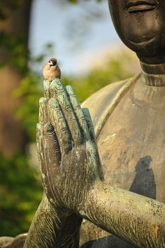 Bouddha te dis : Fuit...sauvé toi....ou prie moi ..... je ne te montrerai pas du doigts si tu t'en vas....Je continuerai à veiller sur toi...