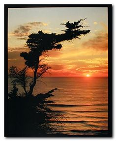 Absolutely amazing! This poster is a wonderful selection for any nature lover. This poster shows the picture of a beautiful cypress coastal sunrise morning, large Ocean and a tree at one corner of the Ocean is sure to attract everyone towards it. This poster will add a elegant touch to your home and goes with every décor style. Perfect for any nature lover. Ensures high quality product with perfect color accuracy.and goes with every décor style. Perfect for any nature lover.