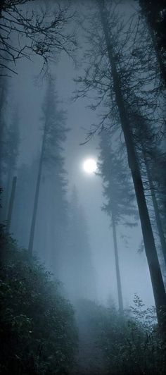 Moon in the Foggy Forest. Nature Photography.: