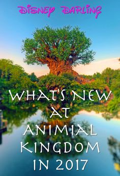 Animal Kingdom 2016 was Disney Darling's most popular post last year, and it's time to do an update! DAK definitely will have the bigge...
