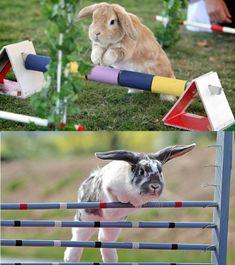 "rabbit jumping show in Sweden known as ""Kaninhoppning"""