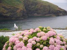 Port Issac Cornwall England