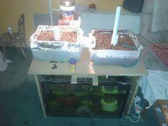 Mini aquaponic system