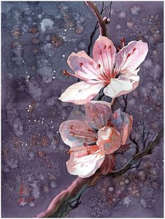 deviantart sakura by on sakura by on DeviantArtYou can find Chinese art and more on our website Sakura Painting, Cherry Blossom Painting, Oil Painting Flowers, Watercolor Flowers, Watercolor Paintings, Paintings Of Flowers, Daisy Painting, Cherry Blossoms, Art Floral
