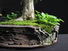 bonsai pots - Google Search