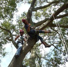 Out On A Limb Tree Climbs