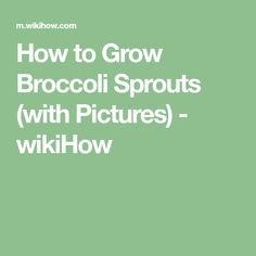 How to Grow Broccoli Sprouts (with Pictures) - wikiHow