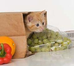 Homemade Cat Food Recipes