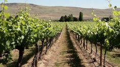 Heart of Willamette Wineries, surrounding Corvallis, Oregon.