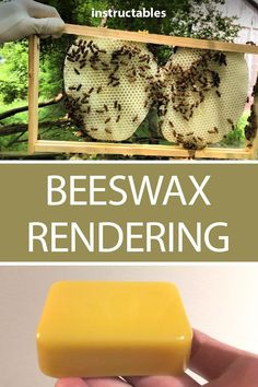 Beekeeping is endlessly fascinating! Learn a little bit more about beekeeping and backyard ecology in this helpful Instructable! Drone Bee, Raising Bees, Backyard Beekeeping, Whole Foods Market, Back To Nature, Queen Bees, Bee Keeping, Ecology, Harvest