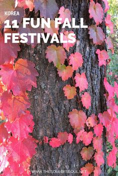 11 Fun Fall Festivals in Korea. Autumn in Korea is beautiful but also has numerous fun activities to get involved in from the Andong Maskdance Festival to Lantern festivals and more. Here are the 11 Best Festivals to visit in Korea in the autumn.