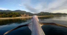 El mundo a través de los ojos de un pelícano por @Elsa López Fernández. Vota en: http://www.marketertop.com/otros/el-mundo-a-traves-de-los-ojos-de-un-pelicano/
