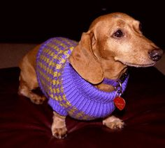 Houndstooth Hundestrickjacke by Karen roman - free ravelry download -dog sweater for  Dachshund