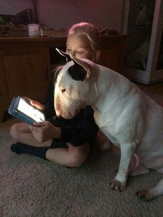 Uplifting So You Want A American Pit Bull Terrier Ideas. Fabulous So You Want A American Pit Bull Terrier Ideas. Chien Bull Terrier, Bull Terrier Funny, Pitbull Terrier, Terrier Dogs, Boston Terrier, Miniature Bull Terrier, Terrier Breeds, Bully Dog, English Bull Terriers