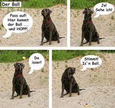 Hunde Community – Fun / Lustiges – Google+