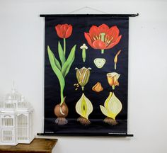 Beautiful vintage botanical pull-down chart. #countryliving