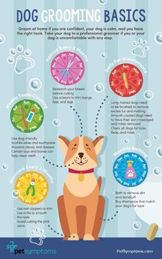 Are you a new pet owner and needs helpful dog grooming tips, you've come to the right place! Check out these tips and secrets to groom your dog at home. Dog Grooming Shop, Dog Grooming Salons, Dog Grooming Supplies, Dog Grooming Business, Dog Supplies, Pet Care Tips, Dog Care, Pet Tips, Puppy Care