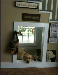 Cute built-in under-the-stairs dog bed with its own window