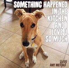 Greyhound Life |                                                                                                                                                                                 More
